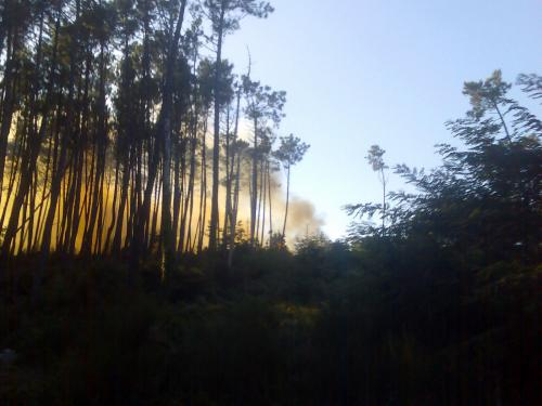 El fuego en los árboles